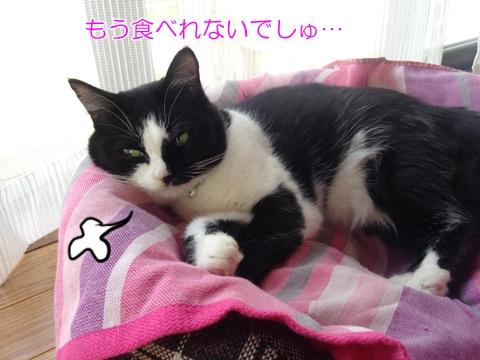 猫ベッドで寝る