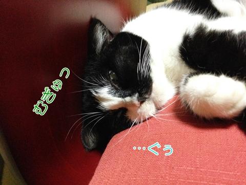 猫寝顔ブサイクホラー