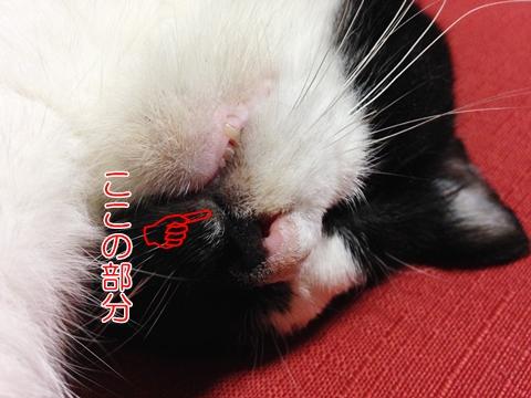 猫口鼻の下割れ目