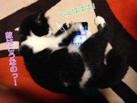 猫スマホ好き邪魔する