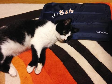 猫ムスビ、夏のひんやりマットついに…!?