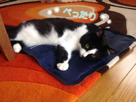 猫ひんやりクールジェルマット暑さ対策