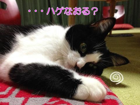 猫ハゲ真菌自然治癒シャンプー