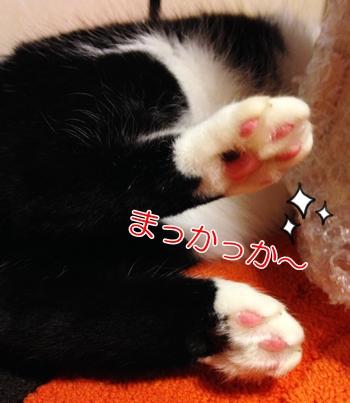 猫肉球色変化