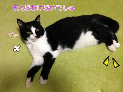 猫ムスビ、足短くない?