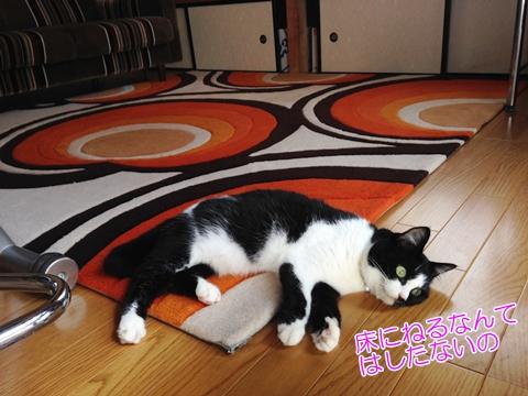 猫床に寝ない
