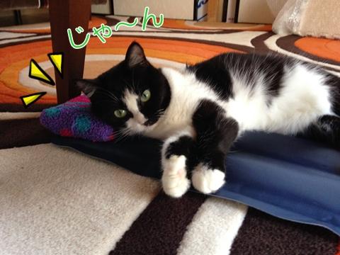 猫夏暑さ対策ひんやりジェルマット