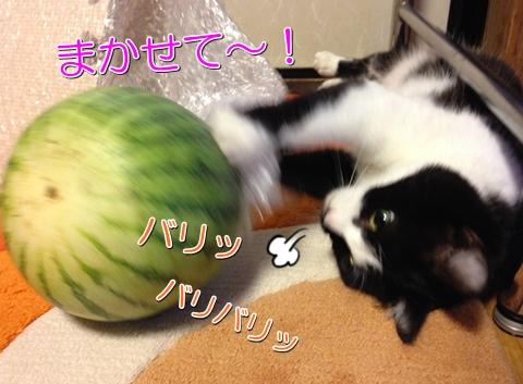 猫とスイカ