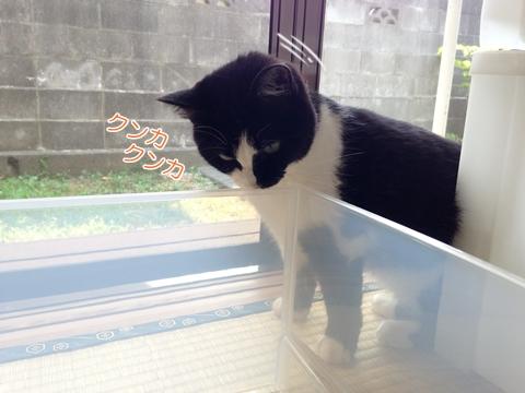 猫掃除邪魔衣装ケース