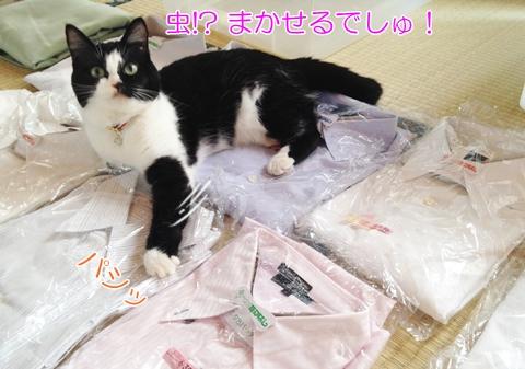 猫シャツの上くつろぐ