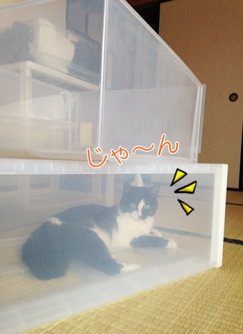 猫衣装ケースの秘密基地