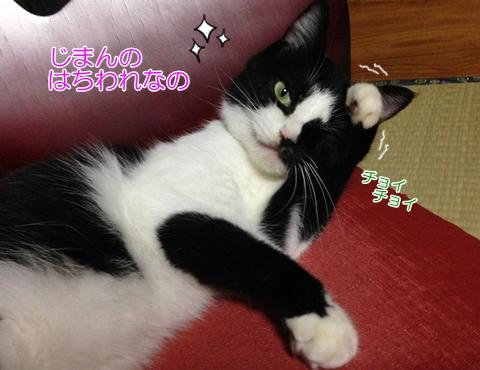 猫の種類、日本のはちわれの性格は?縁起が悪い?