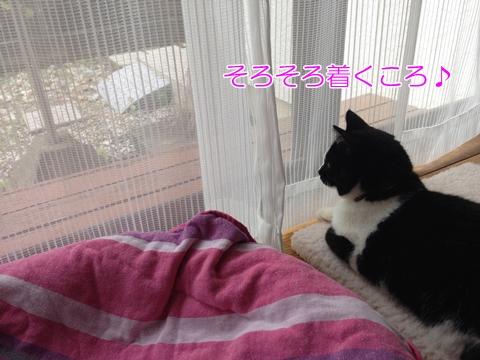 猫お客様を待つ