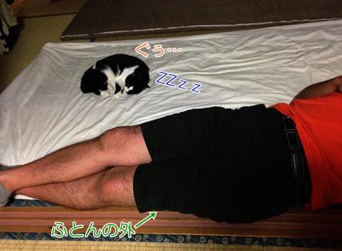 猫お客さん添い寝