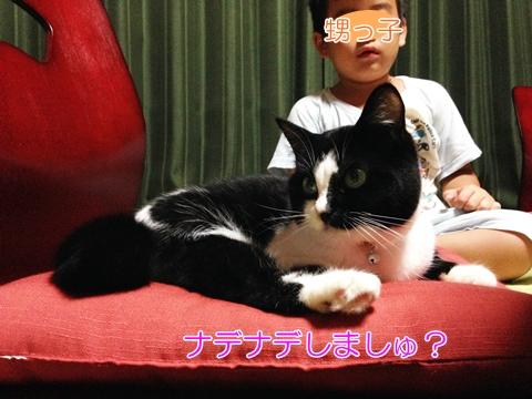 猫子供嫌い?