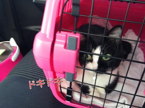 猫ムスビ、ペットホテルに預ける際の選び方