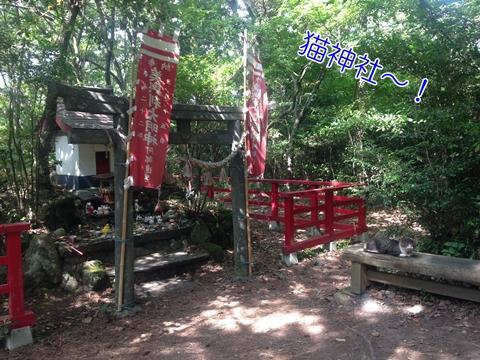 宮城県石巻猫の島田代島猫神社