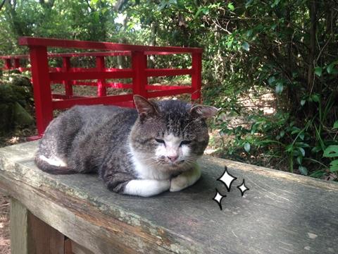 宮城県石巻猫の島田代島