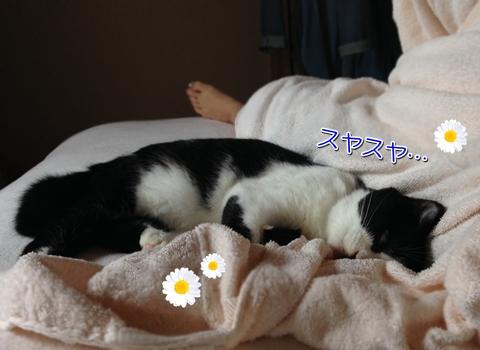 猫ペットホテル預けるストレス