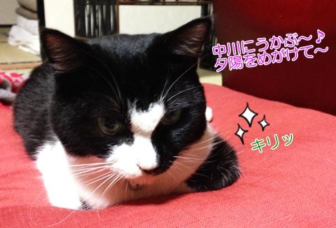 ハチワレ猫黒白性格縁起が悪い?