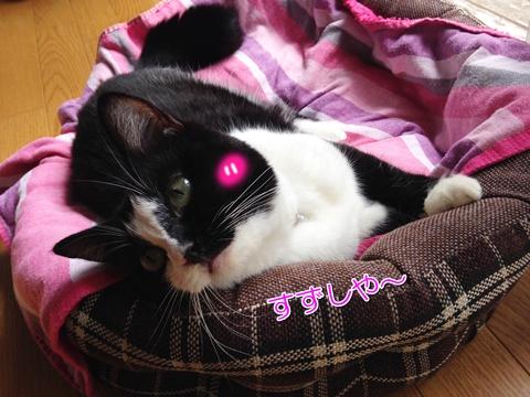 猫の島「田代島」旅行記①宮城県石巻から船で