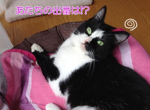 猫の島「田代島」旅行記②宮城県石巻から船で