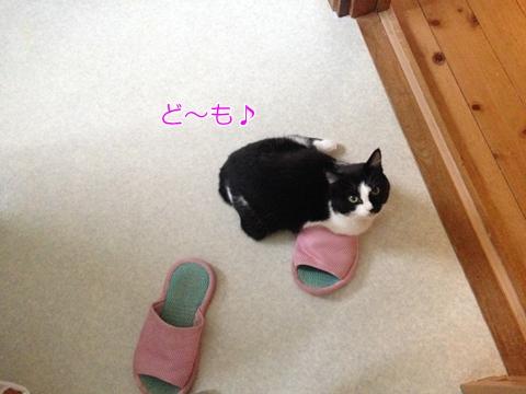 猫スリッパに乗る