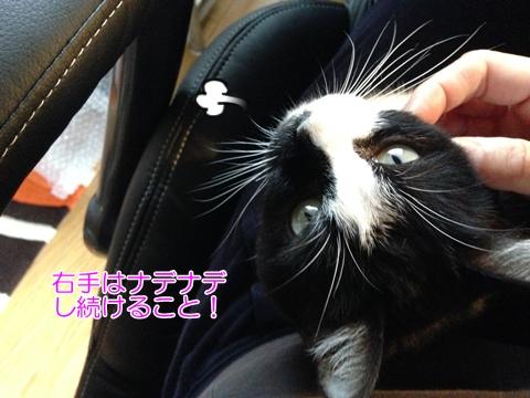 猫が膝に乗ってきたら、夏の終わり?