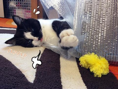 猫おもちゃ手作り人気モール