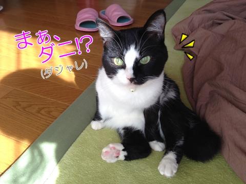 猫のマダニ予防、感染症から守るには【画像つき】