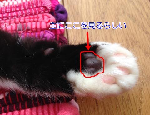 猫肉球手相性格