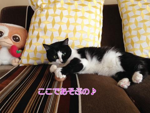 猫 人の真似をする(マネ)4