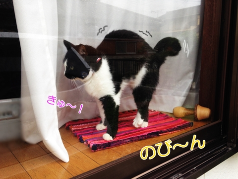 猫怒るストレッチ