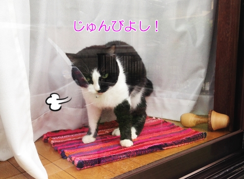 猫怒りのストレッチ