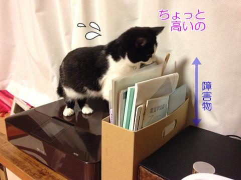 障害物にもめげない猫ムスビ