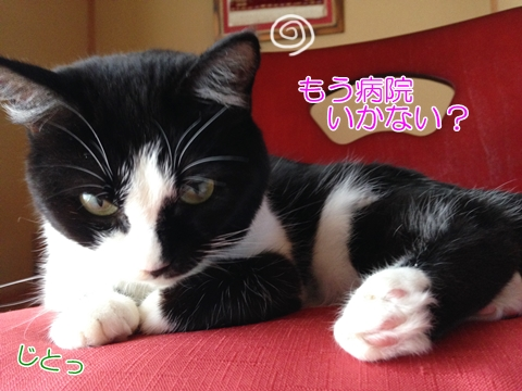 猫ハゲ首の後ろ真菌治療