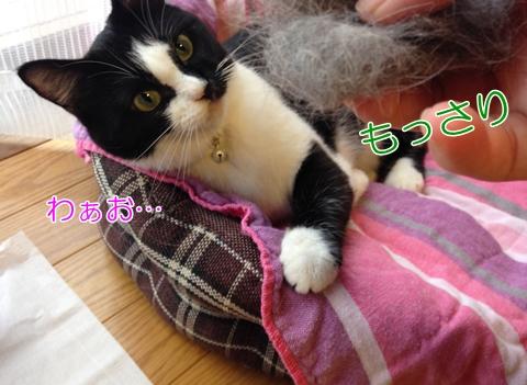 猫秋換毛期