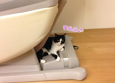 猫マッサージチェア