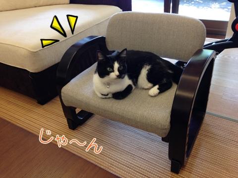 猫座椅子好き