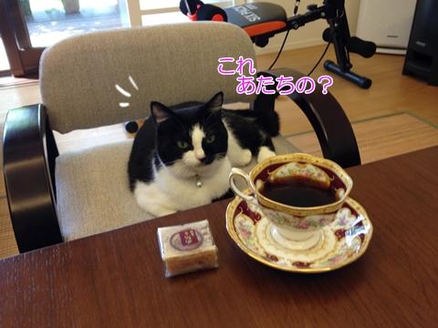 猫おもてなしコーヒー