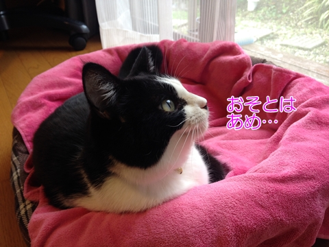 猫冬用ベッドぬくぬく