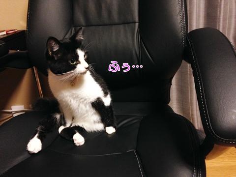 猫 人の真似をする(マネ)1