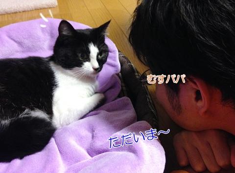 猫あいさつ鼻くっつける