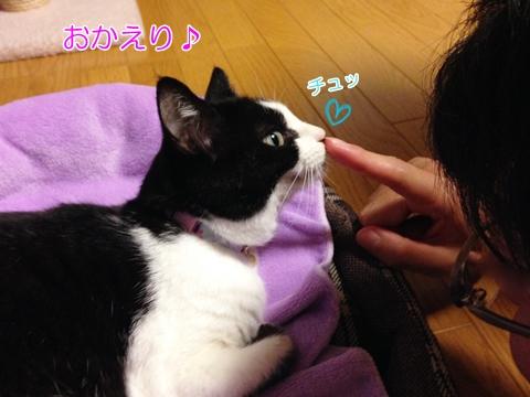 猫あいさつ鼻くっつける2