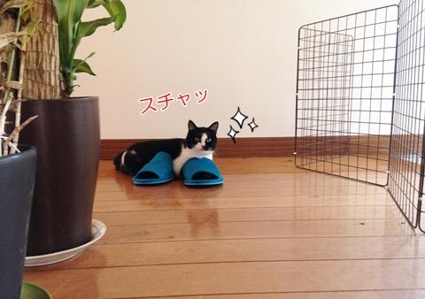 猫 人の真似をする(マネ)5