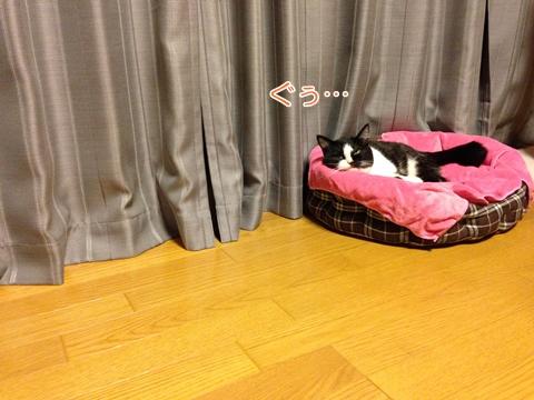 猫熟睡変顔