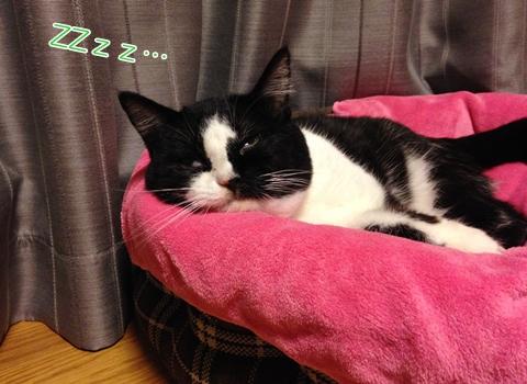 猫熟睡変顔2