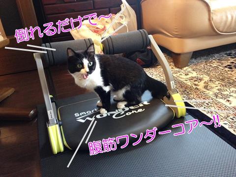 猫ワンダーコアスマート