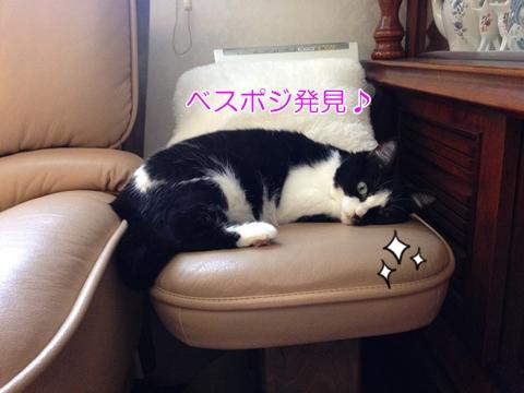 猫実家ソファくつろぐ
