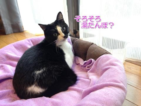 猫湯たんぽ大好き